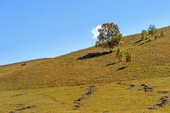 paisaje del otoño de la ladera Imágenes de archivo libres de regalías