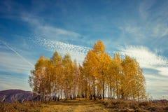 Paisaje del otoño de la montaña con los árboles de abedul amarillo Fotografía de archivo