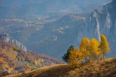 Paisaje del otoño de la montaña con los árboles de abedul amarillo Foto de archivo libre de regalías