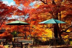 Paisaje del otoño de los árboles de arce rojo ardientes con los bancos de madera y de los parasoles en el bosque Imagen de archivo