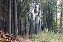 Paisaje del otoño del bosque Foto de archivo