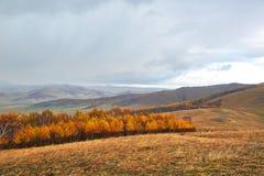 Paisaje del otoño del bosque del abedul de la ladera Imagen de archivo libre de regalías