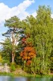 Paisaje del otoño del bosque en el lago en el parque Imágenes de archivo libres de regalías