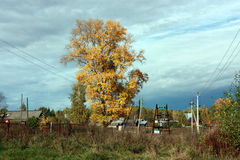 Paisaje del otoño del país El árbol grande con las hojas amarillas, cielo azul con las nubes Fotografía de archivo libre de regalías