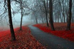 Paisaje del otoño del parque de niebla del otoño con las hojas de otoño caidas rojas Foto de archivo