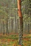 Paisaje del otoño en el bosque imágenes de archivo libres de regalías