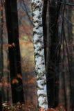 Paisaje del otoño en el bosque Fotografía de archivo