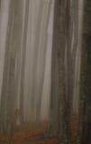 Paisaje del otoño en el bosque Imagenes de archivo