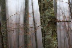 Paisaje del otoño en el bosque Foto de archivo libre de regalías
