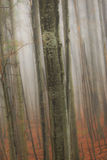 Paisaje del otoño en el bosque Foto de archivo