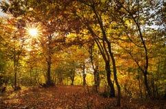 Paisaje del otoño en el bosque Imagen de archivo
