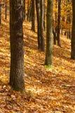 Paisaje del otoño en el bosque, Praga Imágenes de archivo libres de regalías