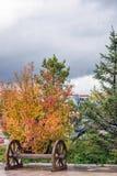 Paisaje del otoño en el cuadrado de Saihaiba Fotos de archivo