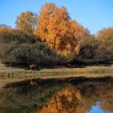 Paisaje del otoño en el lago Fotografía de archivo libre de regalías