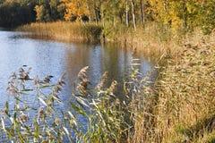 Paisaje del otoño en el lago Imagen de archivo libre de regalías