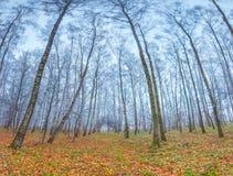 Paisaje del otoño en el parque. Fotos de archivo