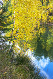 Paisaje del otoño en el río Foto de archivo libre de regalías