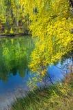Paisaje del otoño en el río Imagen de archivo