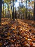 Paisaje del otoño en Illinois central fotografía de archivo