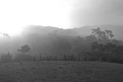 Paisaje del otoño en la mañana brumosa Fotos de archivo