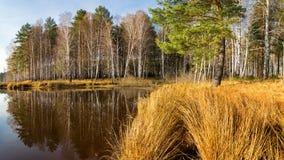 Paisaje del otoño en la orilla del río con el bosque y las cañas Rusia, los Urales, Fotografía de archivo libre de regalías