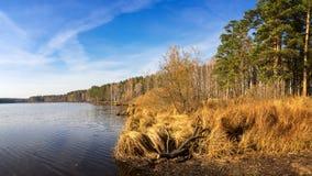 Paisaje del otoño en la orilla del río con el bosque y las cañas Rusia, los Urales, Fotografía de archivo