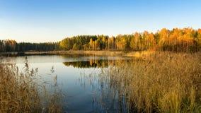 Paisaje del otoño en la orilla del río con el bosque y las cañas Rusia, los Urales, Fotos de archivo