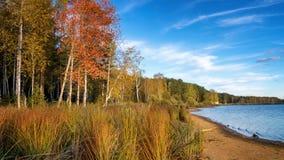 Paisaje del otoño en la orilla del río con el bosque y las cañas Rusia, los Urales, Fotos de archivo libres de regalías