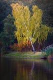 Paisaje del otoño en Mezhyhirya Fotos de archivo libres de regalías