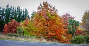 Paisaje del otoño en Nueva Zelanda Imagen de archivo