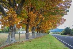 Paisaje del otoño en Nueva Zelanda Fotografía de archivo
