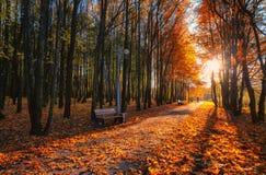 Paisaje del otoño en parque Foto de archivo