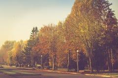 Paisaje del otoño en parque de la mañana Vista de árboles coloridos en el callejón Fotografía de archivo