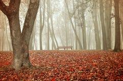 Paisaje del otoño en tiempo de niebla Fotos de archivo libres de regalías