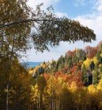Paisaje del otoño en un bosque de la montaña Fotografía de archivo