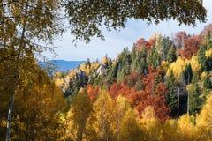 Paisaje del otoño en un bosque de la montaña Fotos de archivo
