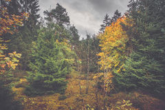 Paisaje del otoño en un bosque escandinavo Fotografía de archivo