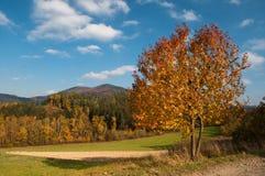 Paisaje del otoño en un día asoleado Fotografía de archivo libre de regalías