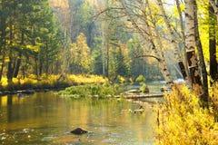 Paisaje del otoño en un río del bosque Imagenes de archivo