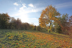 Paisaje del otoño, Moscú Fotografía de archivo