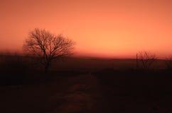 Paisaje del otoño o del invierno con el camino y los árboles La puesta del sol de los haces luminosos del oro En un fondo de las  Imagen de archivo libre de regalías