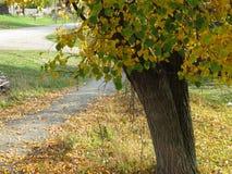 Paisaje del otoño, parque del otoño adentro con los árboles de oro del otoño en tiempo soleado Imagen de archivo libre de regalías
