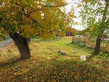 Paisaje del otoño, parque del otoño adentro con los árboles de oro del otoño en tiempo soleado Foto de archivo libre de regalías