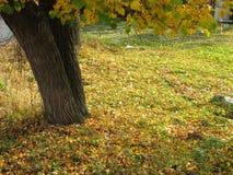 Paisaje del otoño, parque del otoño adentro con los árboles de oro del otoño en tiempo soleado Foto de archivo