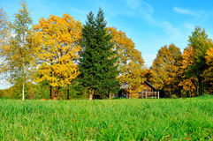 Paisaje del otoño - pequeña casa en árboles amarillos del otoño en tiempo soleado del otoño Fotografía de archivo libre de regalías
