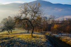 Paisaje del otoño, un árbol sin las hojas, iny en la hierba verde, Fotos de archivo