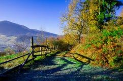 Paisaje del otoño, un árbol sin las hojas, iny en la hierba verde, Imagenes de archivo