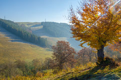 Paisaje del otoño, un árbol sin las hojas, iny en la hierba verde, Foto de archivo libre de regalías