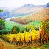 Paisaje del otoño, viñedos en los colores de oro, registro de la vid de Piemonte imagenes de archivo