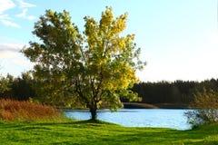 Paisaje del otoño con el lago Fotografía de archivo